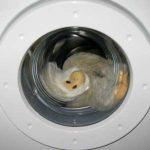 waschmaschine alg2 150x150 - Hartz IV: Single mit Waschmaschinen-Anspruch