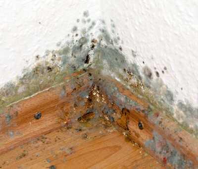 schimmel wohnung - Schimmel und defekte Heizung in Hartz IV-Wohnung