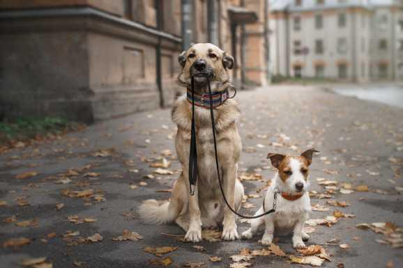 hundezucht - Hartz IV gekürzt - wegen Hobbytierzucht