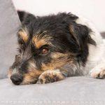 Urteil: Hartz IV Bezieher sollen keine Hunde halten