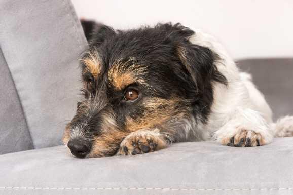 hund hartz iv urteil - Bundessozialgericht: kein Hund bei Hartz IV